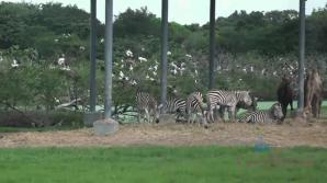 Piper feeds lots of animals at Safari World